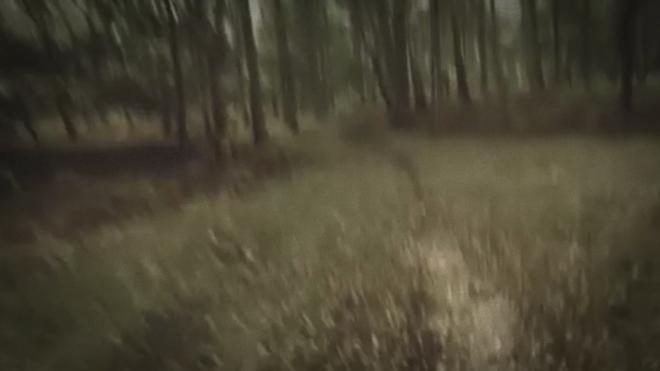 sooo many woods