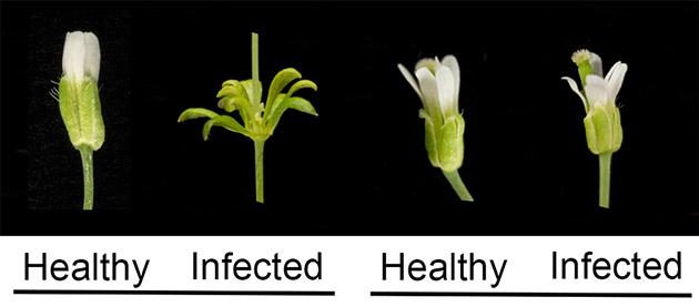 zombie-plant graphic