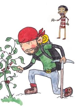 id plants
